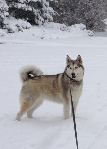 Sasha snow